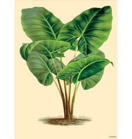 Vanilla Fly poster - plant