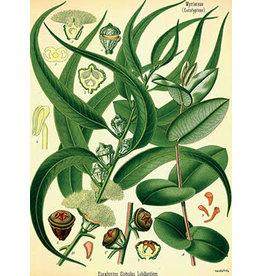 Vanilla Fly poster - planten