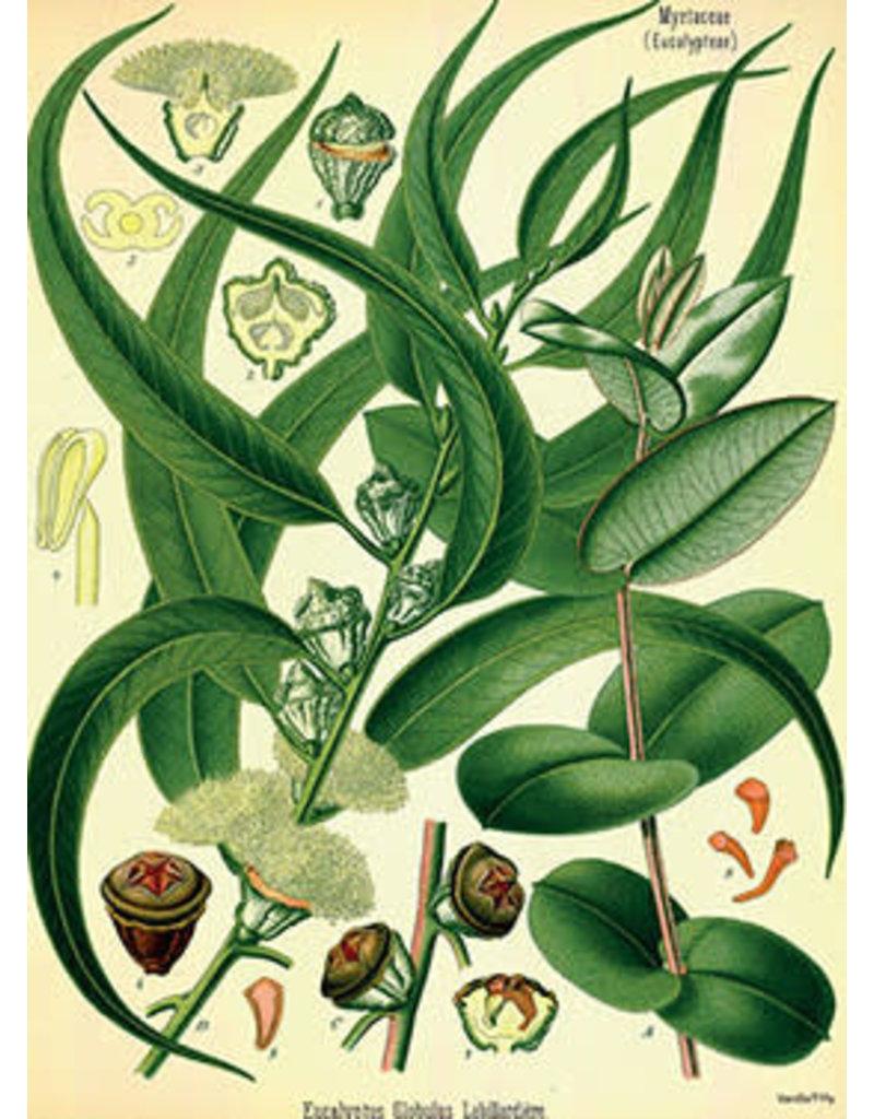 Vanilla Fly poster - plants