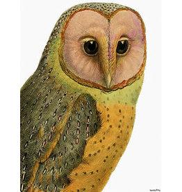 Vanilla Fly poster - owl