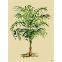 Vanilla Fly poster - palmboom