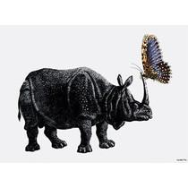 Vanilla Fly poster - neushoorn/vlinder