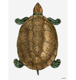 Vanilla Fly poster - schildpad