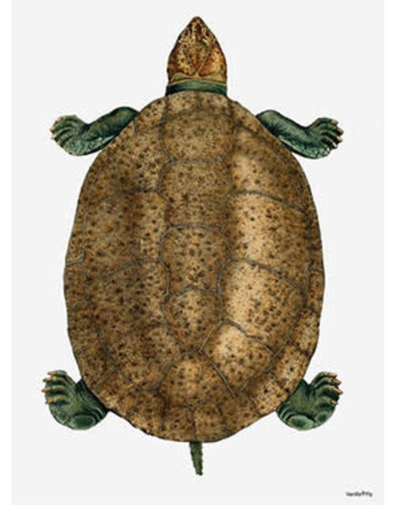 Vanilla Fly poster - turtle