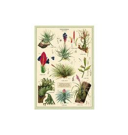 Cavallini decorative wrap - air plants
