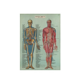 Cavallini decorative wrap - anatomy series
