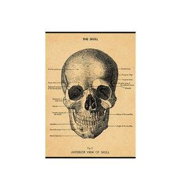 Cavallini decoratieve poster - schedel