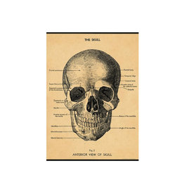 Cavallini decorative wrap - skull