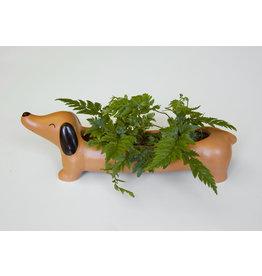 Kikkerland plantenbakje Daisy de teckel
