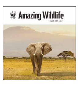 kalender 2021 - 30x30 - amazing wildlife
