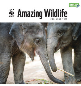 calendar 2022 - 30x30 - amazing wildlife