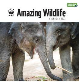kalender 2022 - 30x30 - amazing wildlife
