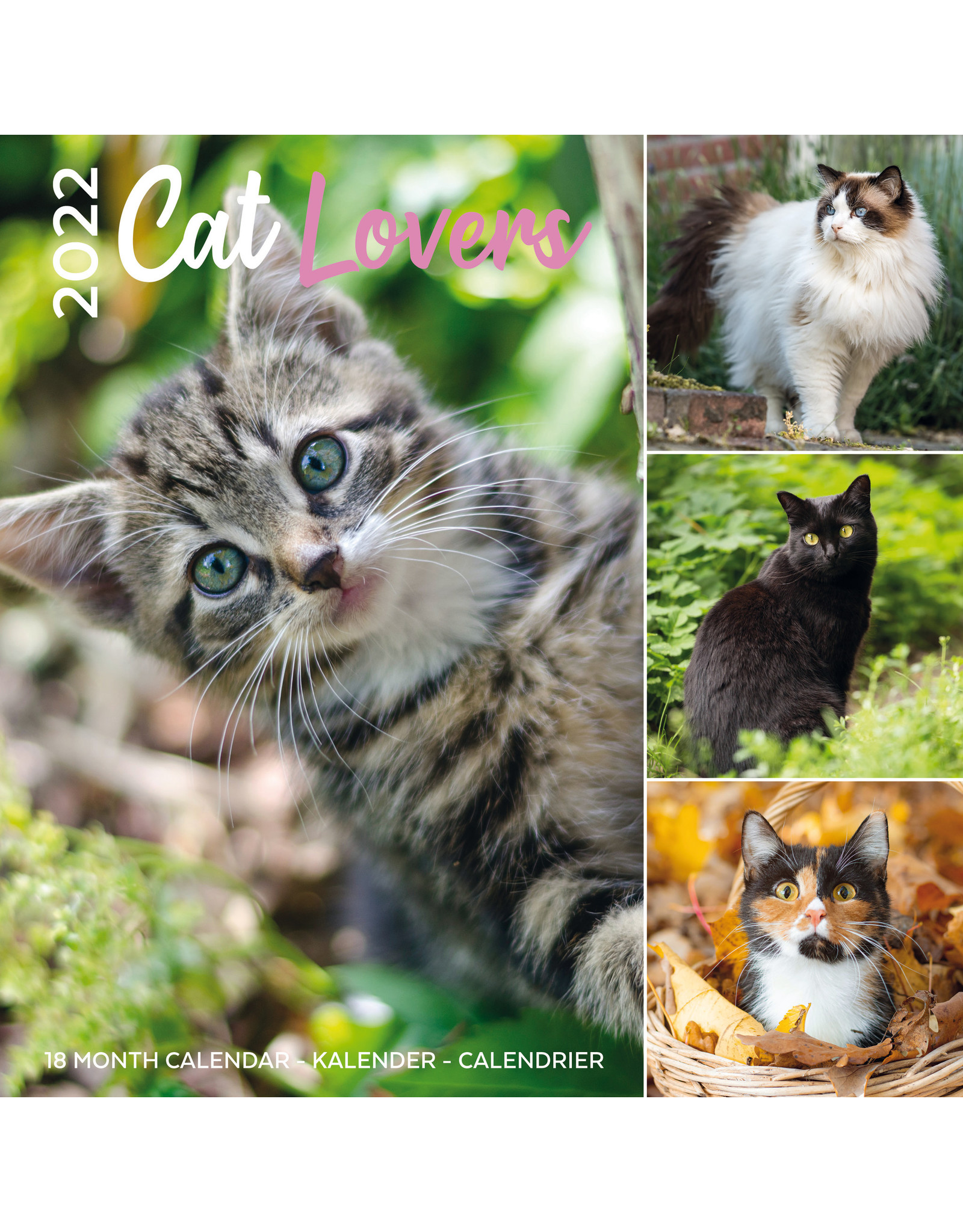 calendar 2022 with for cat lovers