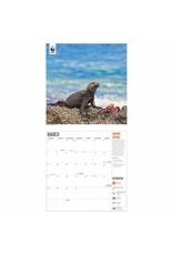 calendar 2022 with amazing wildlife pictures