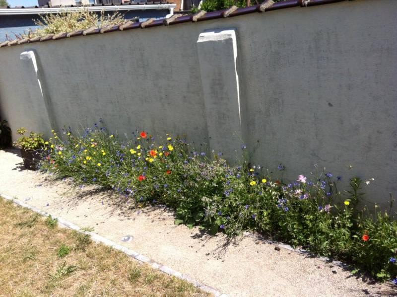 Beefriendly flowerseed