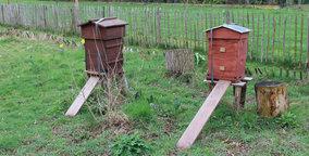 Nectarist op bijenbezoek bij imker Lynn