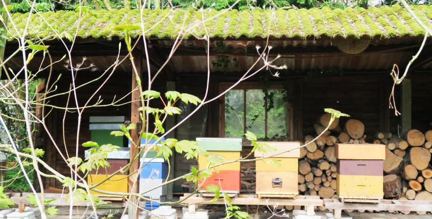 Tip Zo Maak Jij Je Bijen En Kasten Klaar Voor De Lente