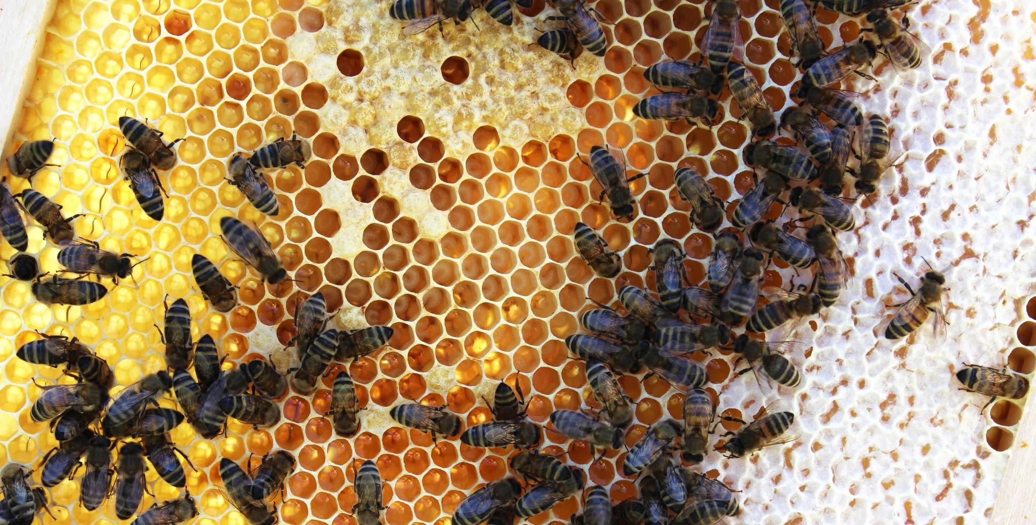 5 tips om honing te oogsten