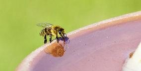 Ook bijen hebben last van de warmte: cruciale tips voor imkers én niet imkers!