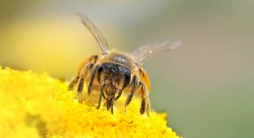 Wat kunnen we voor de bijen doen?