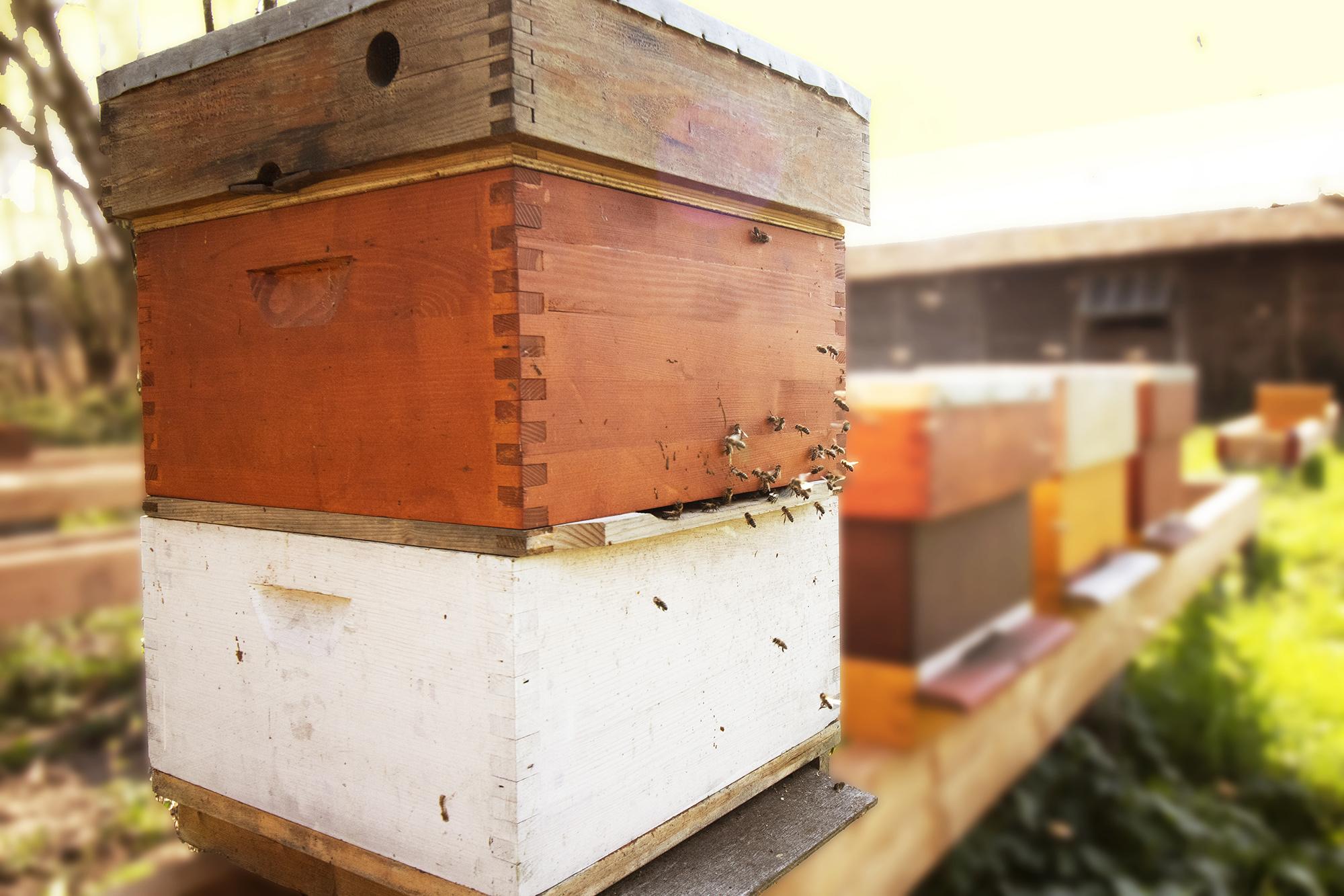 Moet ik mijn nieuwe bijenkast schilderen?