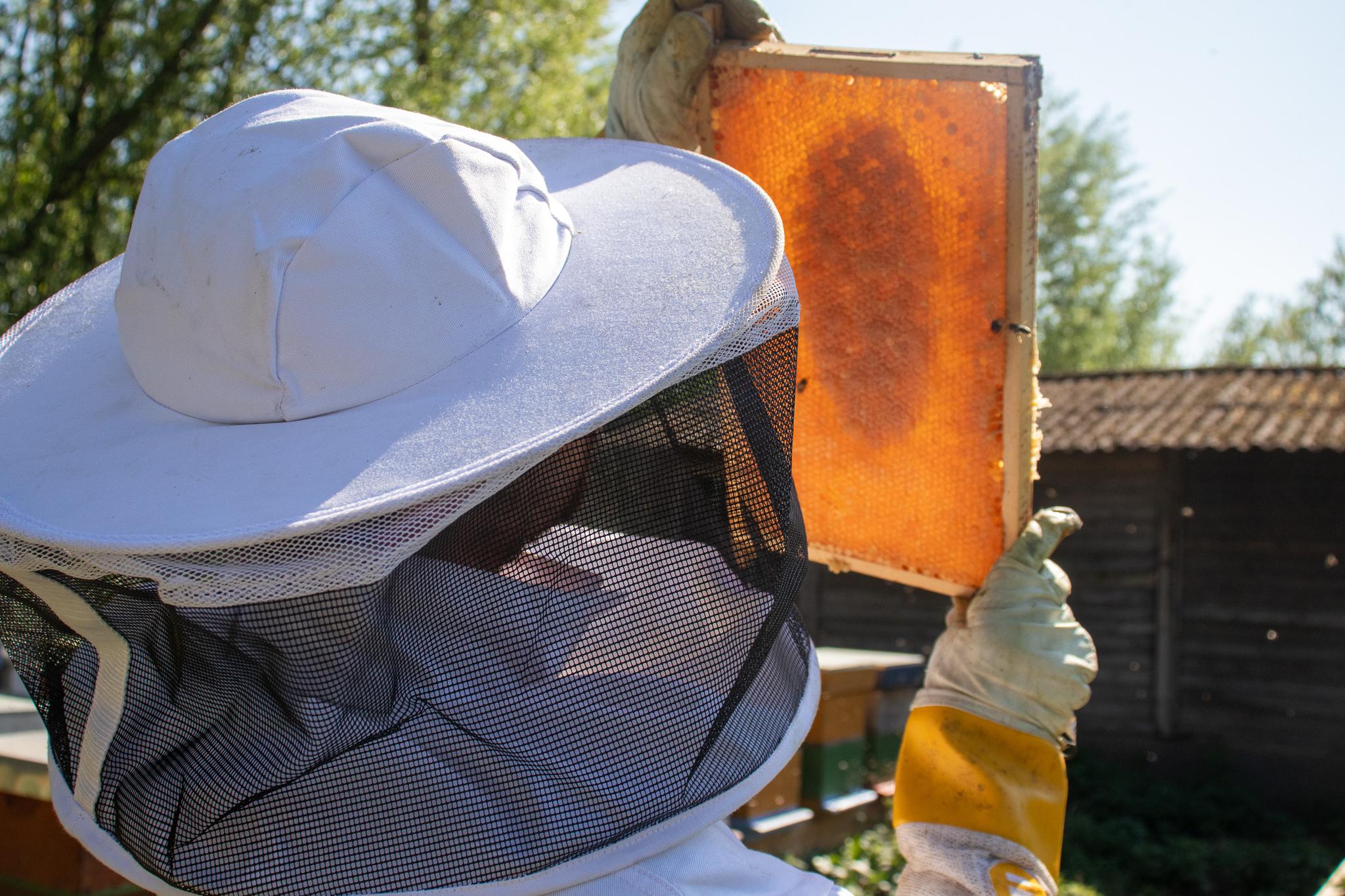 Meter en peterschap: 'worker bee' pakket-1