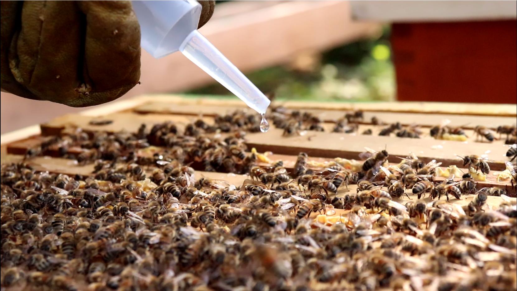 Waarmee behandel ik mijn bijenvolk(en) het best tegen Varroa?