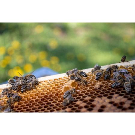 Steunpakket 'schatten uit de bijenkast'