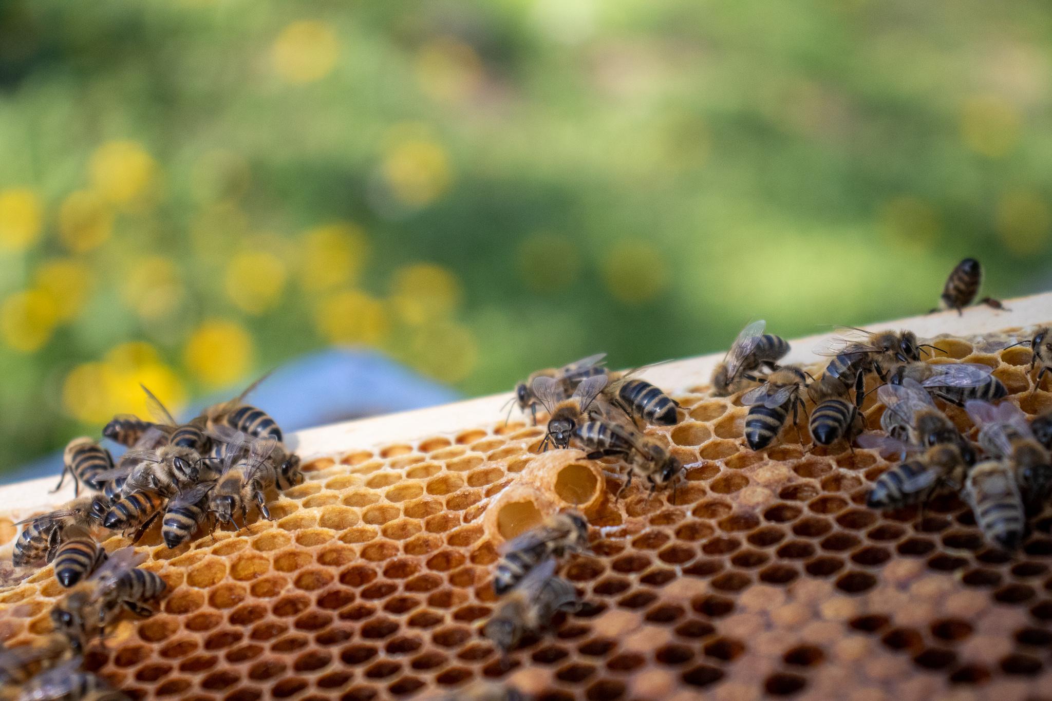 Steunpakket 'schatten uit de bijenkast'-1