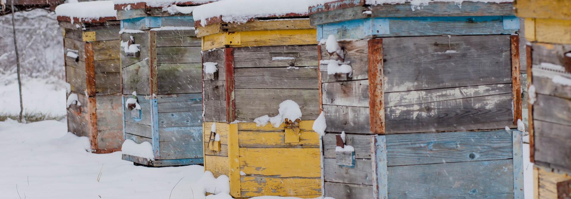 Kan ik een bijenkast zomaar verplaatsen?