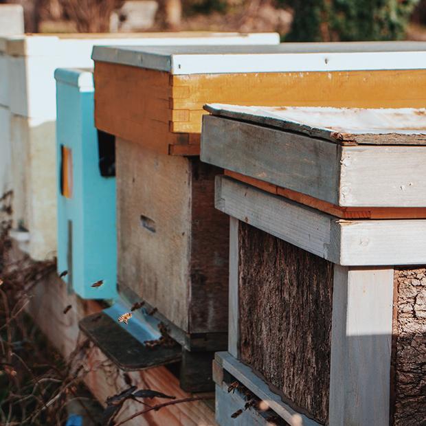 Wat kan je zelf doen om de bijen een handje te helpen?