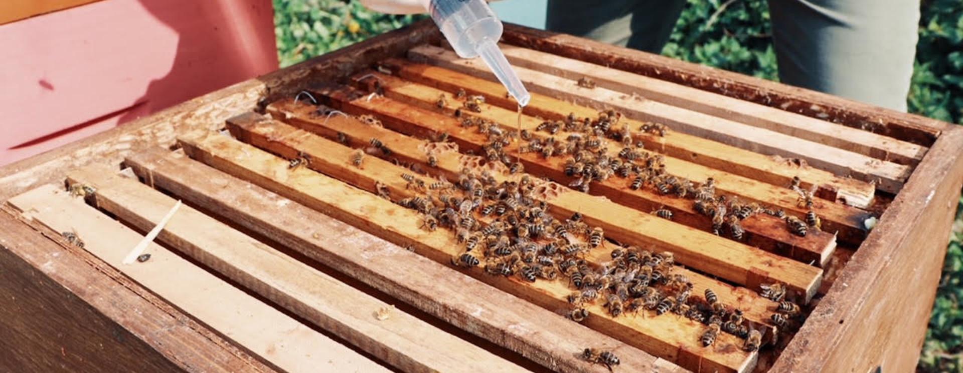 Hive hygiene