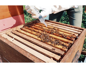 Varroa treatment
