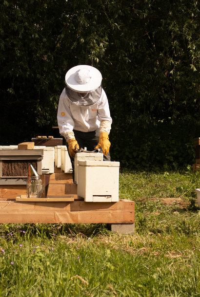 Kit de démarrage ultime + cours d'apiculture de base