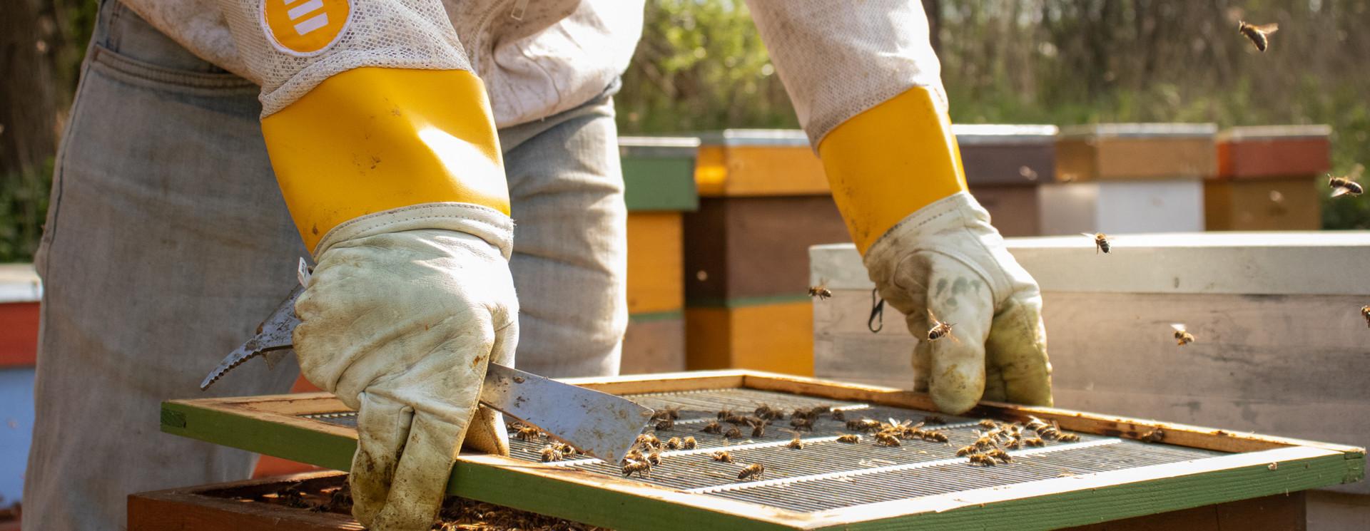 Adopt bees