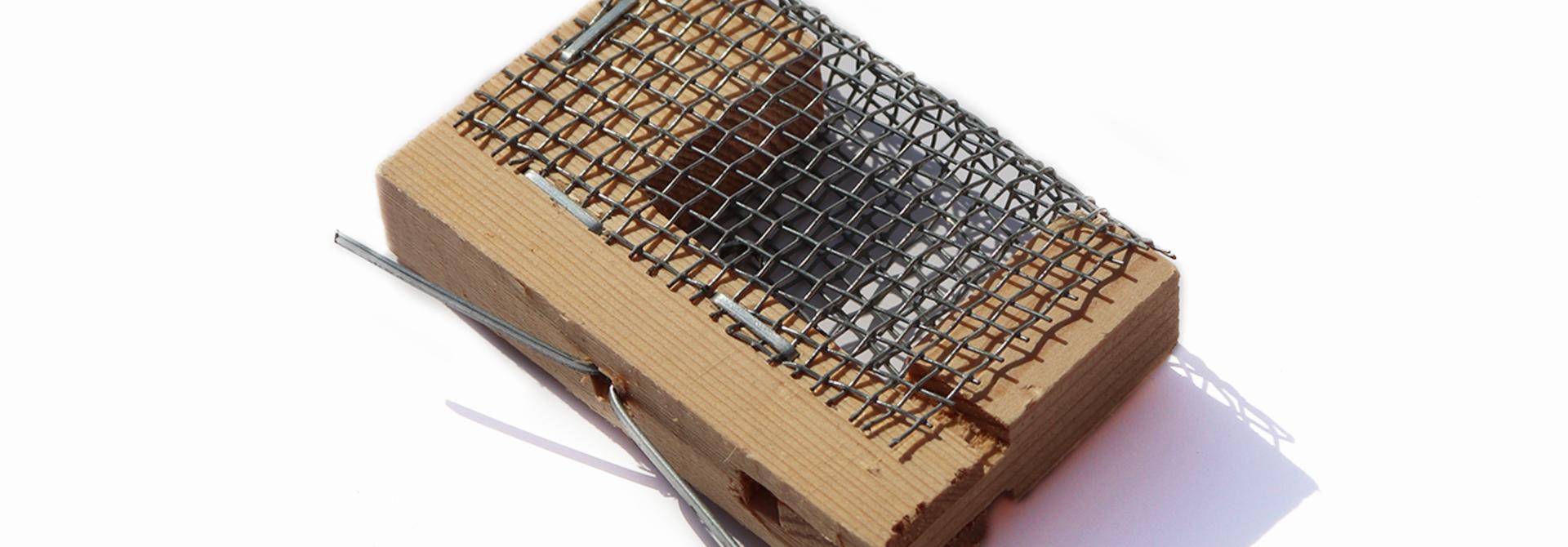 Cage Iltis