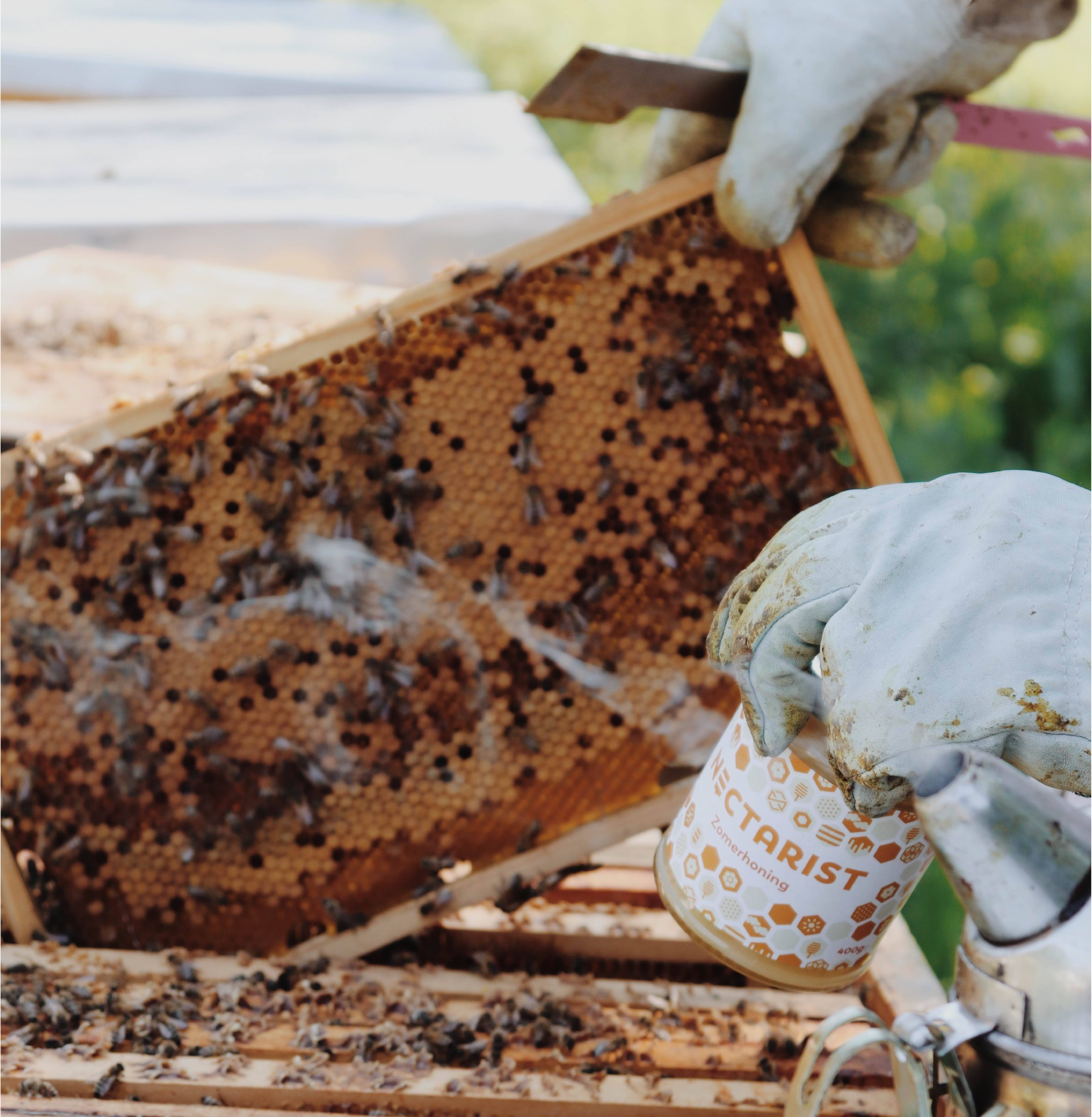 Saving Bees, Supporting Beekeepers