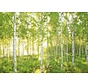 Sunday Fotobehang National Geographic 368x254cm 8-delig