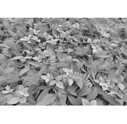 Komar Forest Floor Fotobehang 368x254cm