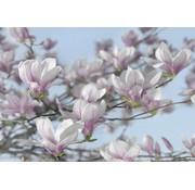 Komar Magnolia Fotobehang 368x254cm