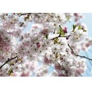 Komar Spring Fotobehang National Geographic 368x254cm