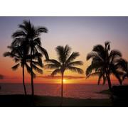 Komar Hawaii Fotobehang 368x254cm