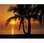 Komar Palmy Beach Sunrise Fotobehang 368x254cm