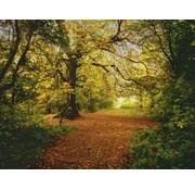 Komar Autumn Forest Fotobehang 388x270cm