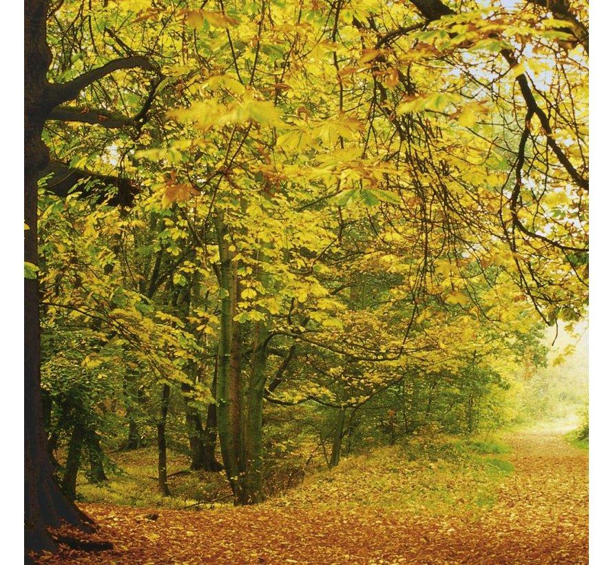 Autumn Forest Fotobehang 388x270cm 8-delig