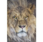 Komar Lion Fotobehang 127x184cm
