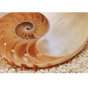Komar Nautilus Fotobehang 184x127cm