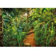 Komar Jungle Trail Fotobehang 368x254cm