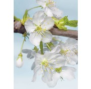 Komar Blossom Vlies Fotobehang 184x248cm