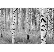 Komar Woods Vlies Fotobehang 368x248cm